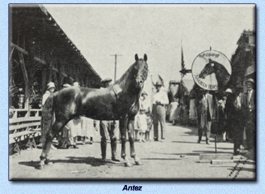 Antez at The Fair