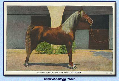 Antez at Kellogg Stables