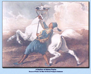 Painting titled: A stallion of Abbas Pasha (Zobeyni)