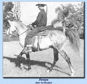 Ferseyn under saddle