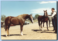 Haapey Pico and Haat Rhod ~ Denver 1983