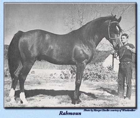 Rahmoun with Harry Harness