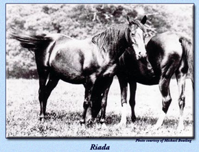Riada with Rose of Hind