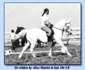 Click to view larger image of Sir ridden by Alice Martin in late 20s LR (26537 bytes)