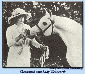 Skowronek with Lady Wentworth