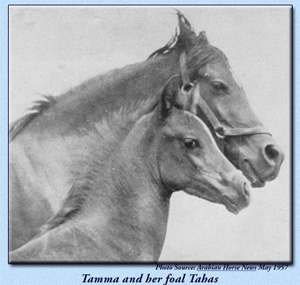 Tamma with foal Tahas
